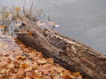 Листья на крае ` s воды Стоковое Фото