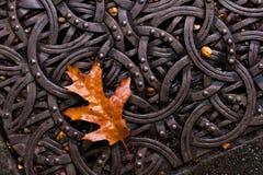 Листья на металле Стоковые Изображения RF