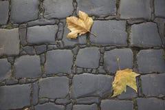 Листья на мостоваой Стоковая Фотография