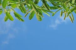 Листья на небе стоковые изображения