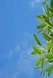 Листья на небе стоковое изображение rf