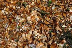 Листья на дне леса Стоковые Фотографии RF