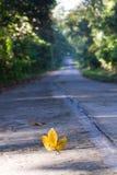 Листья на дороге Стоковые Изображения