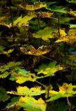 Листья на осени Стоковая Фотография