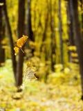 Листья на паутине Стоковые Изображения