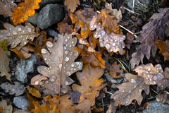 Листья на поле леса Стоковые Изображения