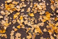 Листья на поле Стоковые Изображения