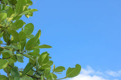 Листья на предпосылке неба Стоковое Изображение