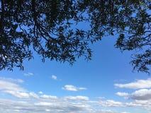 Листья на предпосылке неба Стоковые Изображения RF