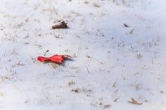 Листья на снеге Стоковые Фото