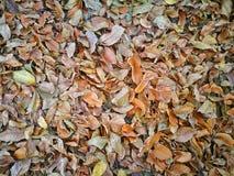 Листья на том основании, сезон осени Стоковая Фотография RF