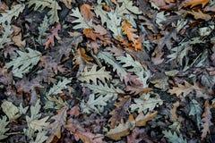 Листья на том основании создают текстуру Стоковые Изображения