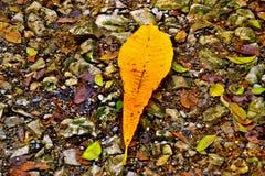 Листья на том основании Стоковое Фото