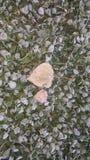 Листья на траве в осени стоковое фото