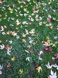 Листья на траве стоковое изображение rf