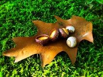 Листья на траве Стоковые Фотографии RF