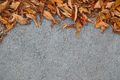 Листья на улице с пустым космосом для текста Стоковые Фотографии RF