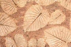 Листья на цементе Стоковое фото RF