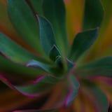 Листья неба Стоковое Изображение RF