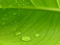 листья новые Стоковое фото RF