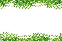 Листья обрамляют изолировано Стоковое Фото