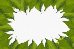 Листья обрамляют, белый космос для содержания текста Стоковые Изображения