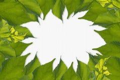 Листья обрамляют, белый космос для содержания текста Стоковое фото RF