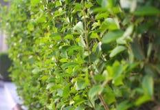 листья озера ветвей предпосылки зеленые Сочные зеленые цвета стоковые фотографии rf