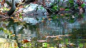 Листья озера и осени сток-видео