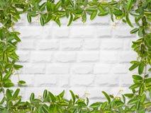 Листья лозы с малой рамкой цветка Стоковая Фотография RF