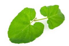 Листья лопуха стоковое фото