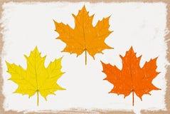 Листья осени акварели Стоковые Изображения RF
