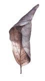 Листья осени акварели сухие Стоковые Изображения