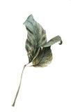 Листья осени акварели Стоковое Изображение