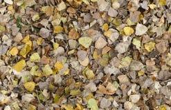 Листья осени, безшовная текстура предпосылки Стоковая Фотография RF