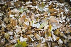Листья осени Брайна стоковые изображения