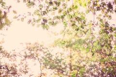 Листья осени ветвей дерева Стоковая Фотография RF