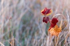 Листья осени виноградин Предпосылка запачканная природой r o r Фотография искусства стоковое фото