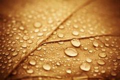 листья осени влажные Стоковая Фотография