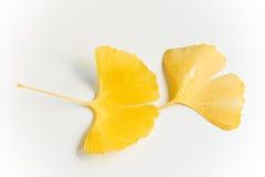 листья осени влажные Стоковые Изображения