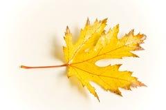 листья осени влажные Стоковое фото RF