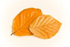 листья осени влажные Стоковое Изображение