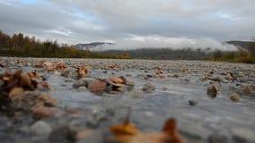 Листья осени вставили в холодном потоке реки с лесом и туманной предпосылкой сток-видео