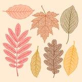 Листья осени, высушенные установленные листья бесплатная иллюстрация