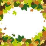 Листья осени в ветре Стоковые Изображения