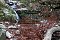 Листья осени в воде Меньшие река и водопад Стоковое Фото