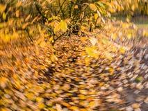 Листья осени в желтый и оранжевый падать и упаденные в rotatin стоковое изображение rf