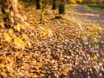 Листья осени в желтый и оранжевый падать и упаденные в rotatin стоковая фотография