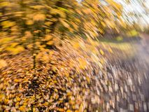 Листья осени в желтый и оранжевый падать и упаденные в rotatin стоковые изображения