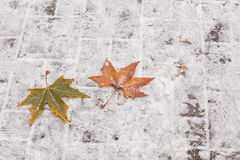 Листья осени в зиме Стоковая Фотография